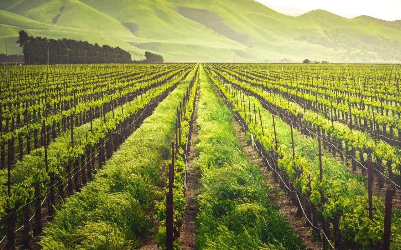 filtros y métodos de filtración para vinos 01