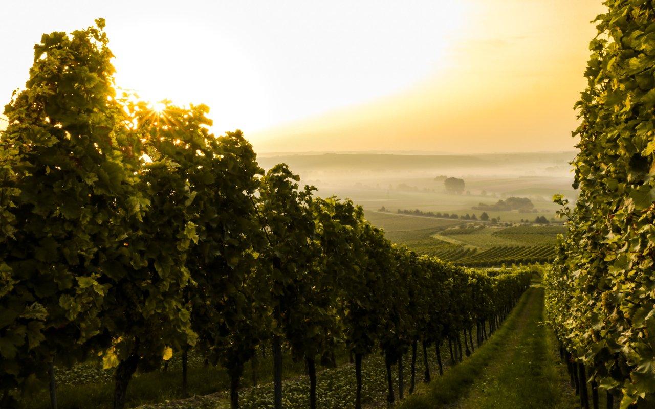 filtros y métodos de filtración para vinos 03