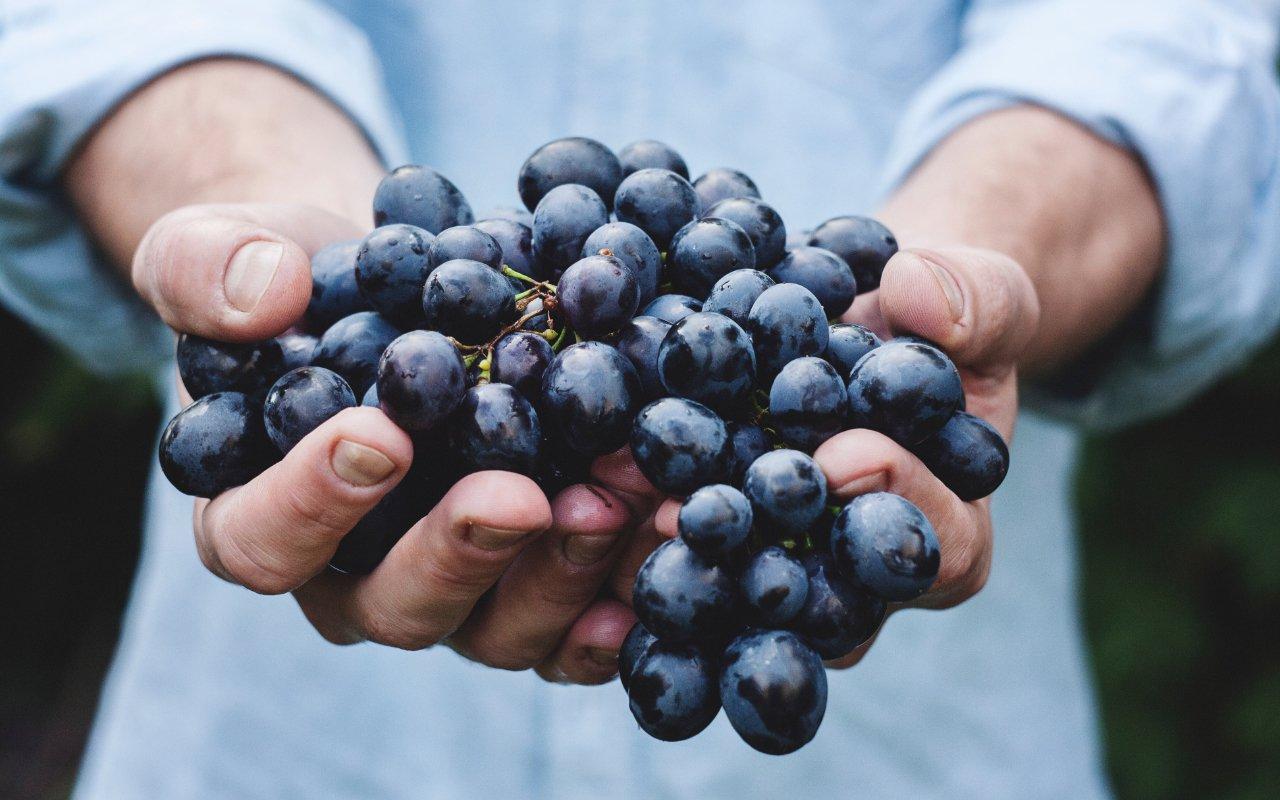 filtros y métodos de filtración para vinos 04