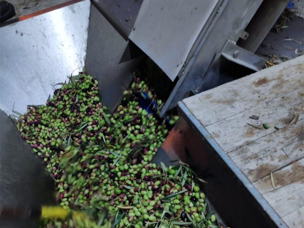 maquinaria y complementos para hacer el mejor aceite de oliva02